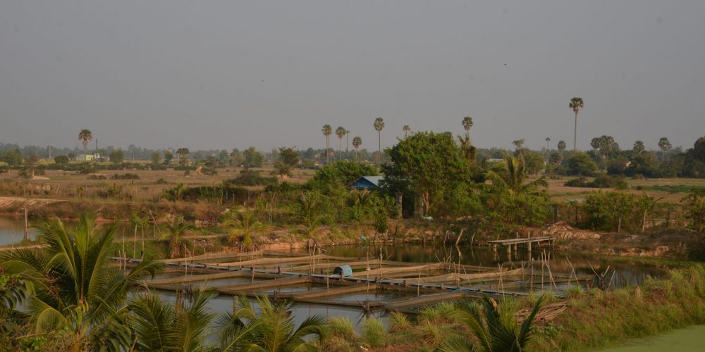 ASA's CAST-Cambodia project is working with the Royal Government of Cambodia to identify fish farming and related aquaculture businesses that are candidates for Cambodia's new $50 million COVID-19 response fund for agriculture.